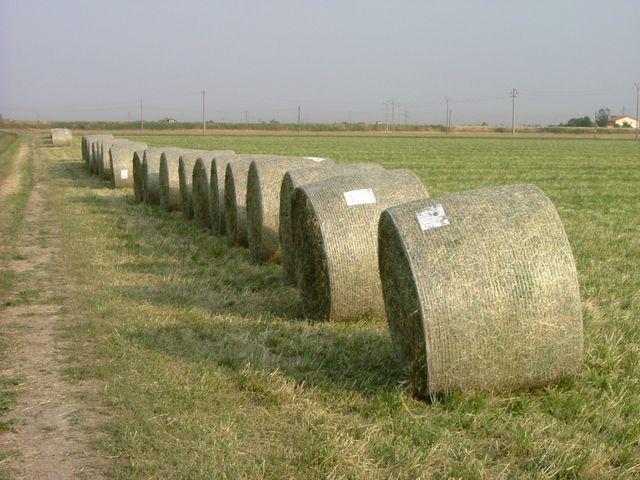 foraggio-raccolto